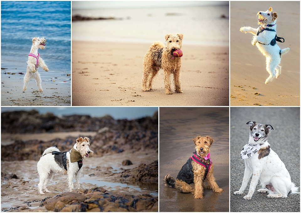 Wakefield pet photography