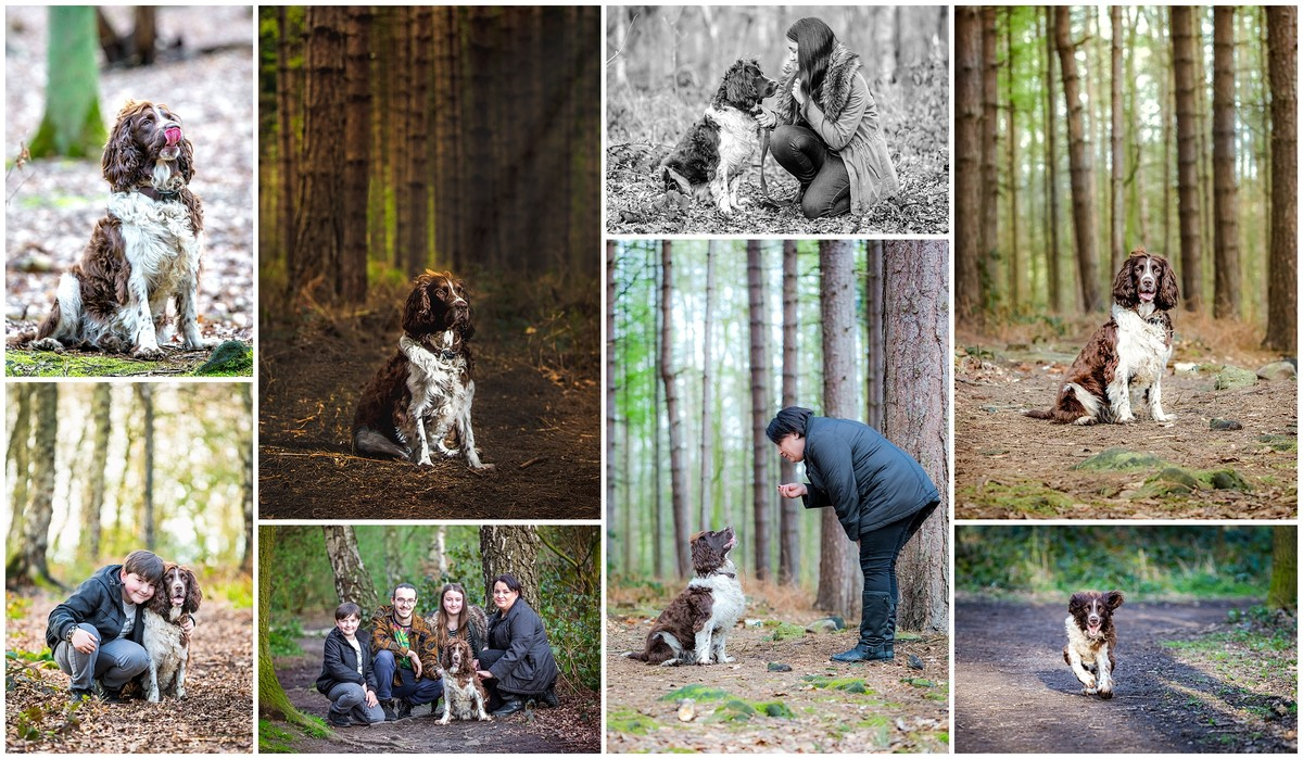 Pet photographer in Wakefield and West Yorkshire